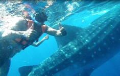 Swimming with whale sharks 20 miles off the coast of Cancun!